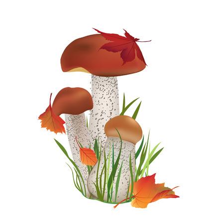 Nancyint Motif de Champignons color/és Fard /à Joues Boletus Sketch Style Plantes Automne Illustration Boxer pour Hommes XXL