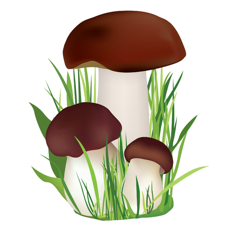 Mushrooms in grass  Nature symbol vector collection isolated on white background  Mushroom vector illustration collection Stock Vector - 22796673