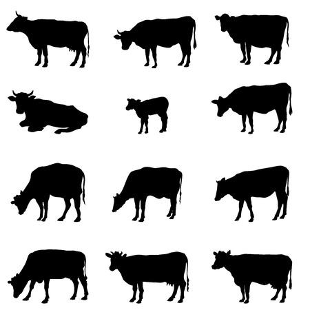 Krowa ustawić wektor sylwetka kolekcja Ilustracje wektorowe