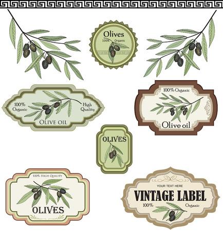 vasi greci: Etichette di olive dell'annata di raccolta Vettoriali