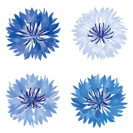 Flower set  Cornflower isolated  Summer meadow flowers vector collection