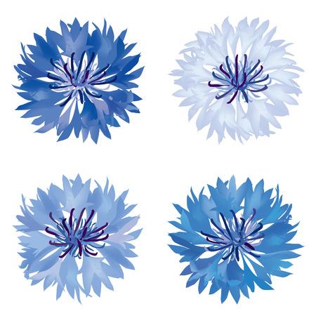 Cornflower: Flower set  Cornflower isolated  Summer meadow flowers vector collection