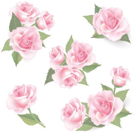 Flor rosa set Vector floreo colección primavera imagen aislada en el fondo blanco