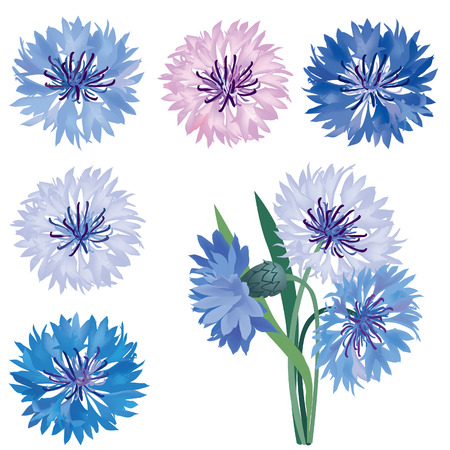Flower set  Cornflower isolated  Summer meadow flowers vector collection   Vector