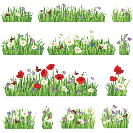 field of daisies: Grass background set  Summer flower border collection  Nature icons