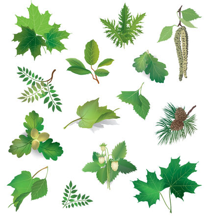 Summer icon set.  Green leaves and berries.  Nature symbol vector collection isolated on white background   Vector