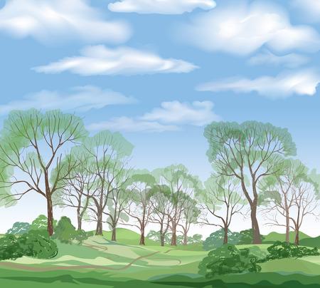 summer trees: Fondo del paisaje. �rboles del verano. Bosque verde y el cielo azul con nubes.