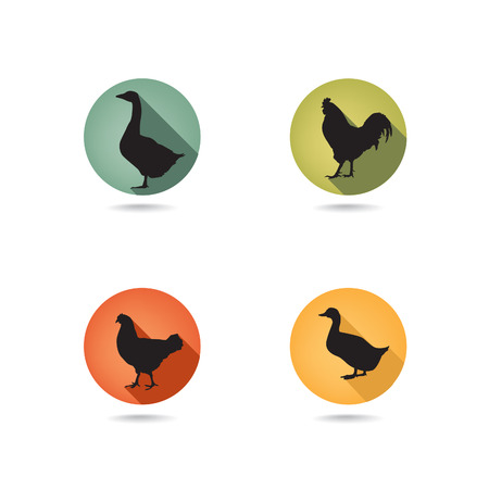 cock duck: Livestock icons set  poultry symbols  Farm birds collection