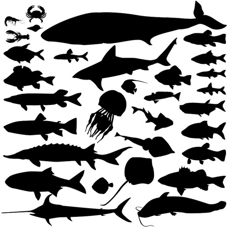 sturgeon: River and sea fish silhouette set  Marine fish and mammals  Sea food icon collection   Illustration