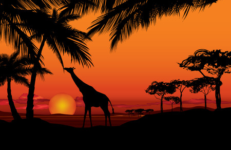 flora fauna: African landscape with animal silhouette Illustration