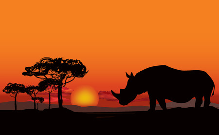 flora fauna: African landscape with animal silhouette. Savanna sunset background.