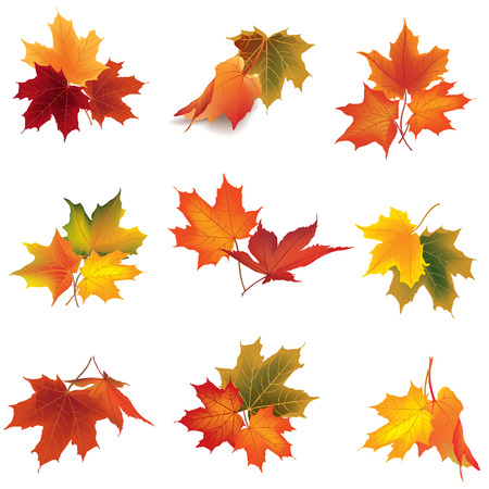 Autumn icon set. Fall leaves and berries. Illustration