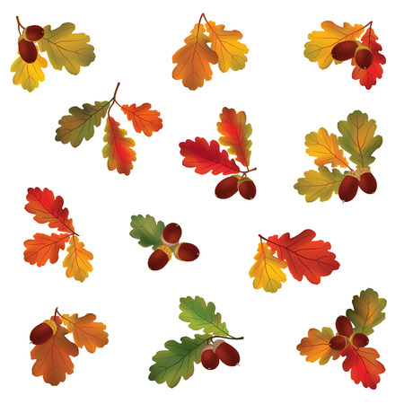 chokeberry: Autumn icon set. Fall leaves and berries.