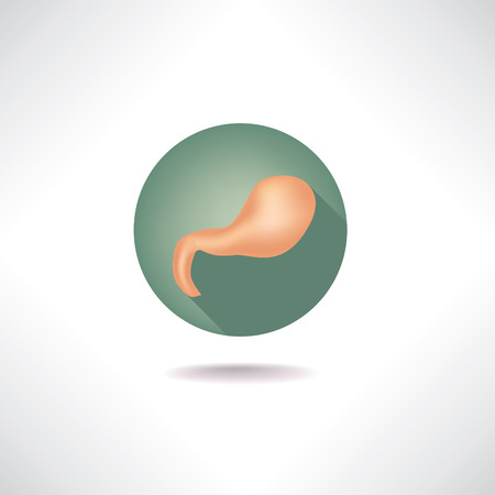 cystic duct: Stomach icon. Human anatomy web buttons set.