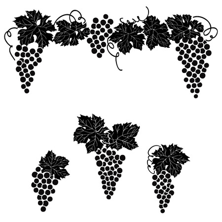 Vine grape ornament element decor set. Illustration