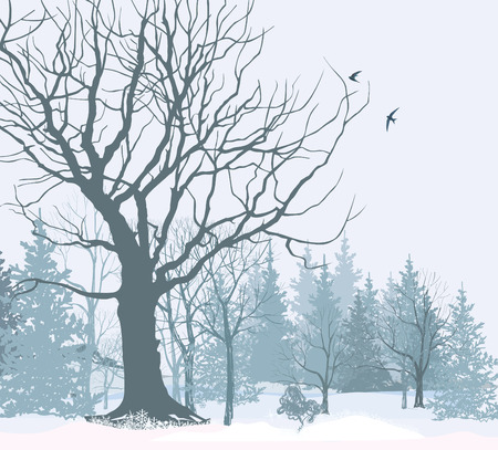 Christmas snow landscape wallpaper. Snowy forest background. Tree without leaves over snow.  Winter park or garden.