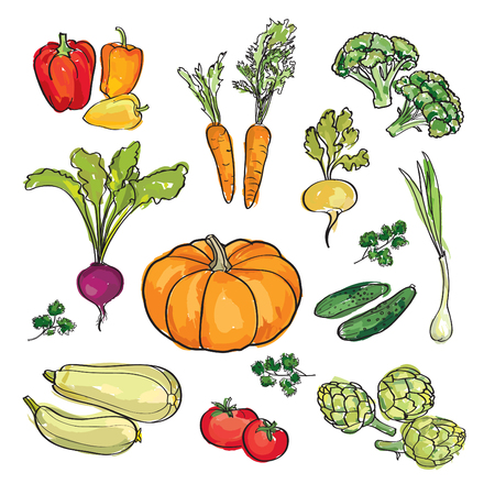 maize: Vegetable set. Hand drawn watercolor food ingredient collection. Illustration