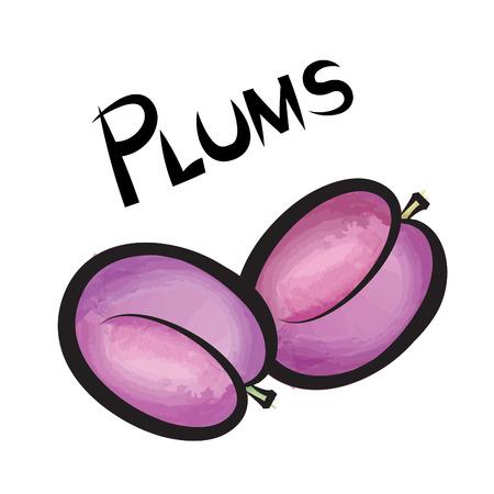 ciruelo: Pulms aislado. Diseño de etiquetas de frutas Plum. Conjunto de la mano de la acuarela dibujada baya. Ilustración vectorial colección.