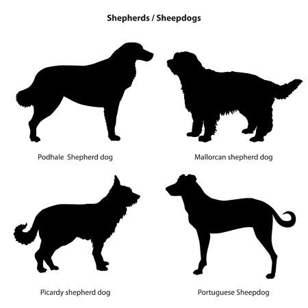 sheep dog: Dog silhouette icon set. Sheped dog collection. Sheedogs.