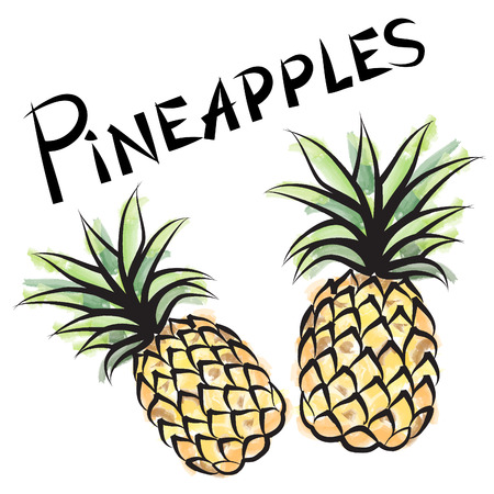 Pineapple isolated. Fruit label set. Hand drawn watercolor vector illustration. Illustration