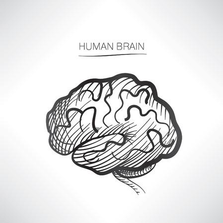 parietal: Human brain isolated. Internal organ icons sketch Illustration