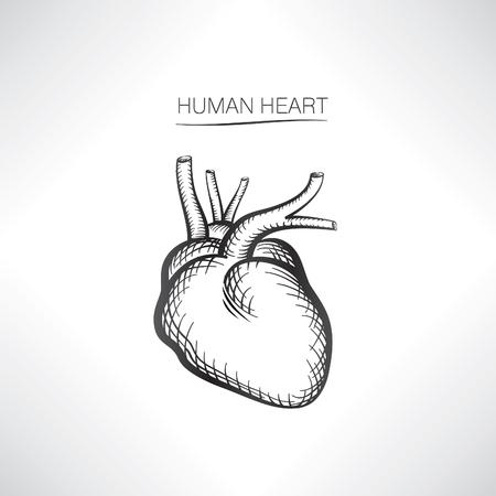 human heart: Aislado corazón humano. Esbozo iconos de órganos internos Vectores