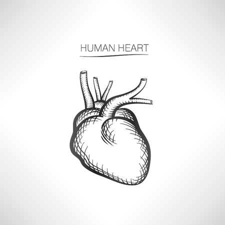 bosom: Human heart isolated. Internal organ icons sketch