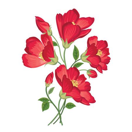 jardines flores: Ramo de la flor. Marco floral. Flourish tarjeta de felicitaci�n. Blooming flores aisladas sobre fondo blanco Vectores