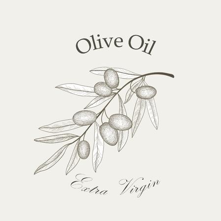 branch: Branche d'olivier avec des olives isolées croquis sur fond blanc Retro branche d'olivier Gravure Vector illustration