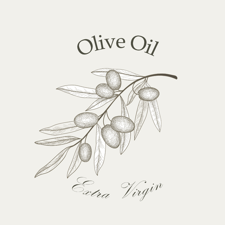 foglie ulivo: ramo di un albero di ulivo con olive isolate schizzo su sfondo bianco Retro ramo d'ulivo illustrazione incisione vettoriale Vettoriali