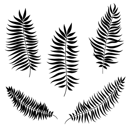 Leaves set. Palm leaf silhouette vector collection
