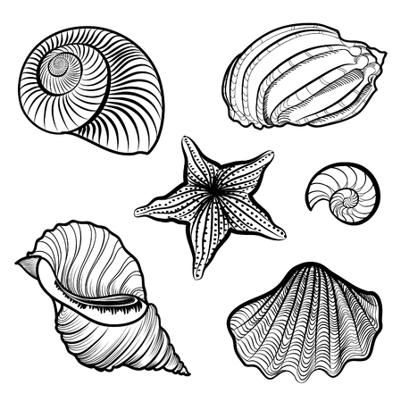 conch: Seashell and starfish collection. Sea shell set ingraved vector illustration solated on white background.