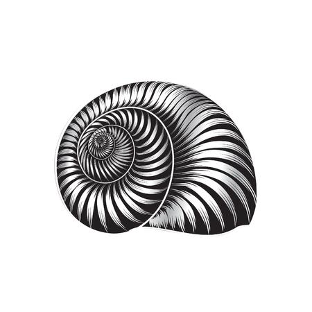 貝殻 ingraved ベクトル イラスト白背景に分離されました。
