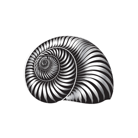 Seashell ingraved vector illustration isolated on white background. Illustration