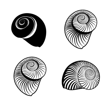 貝殻のコレクションです。海のシェルは、白い背景の上 ingraved ベクトル図 solated を設定します。