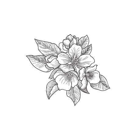 dahlia: Floral background. Greeting card with flower. Flourish border. Gentle decor with summer flower dahlia. Black and white vector illustration
