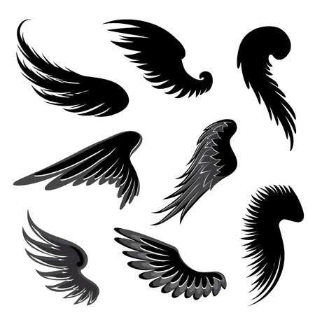 black feather: Wings Vector Set. Illustration