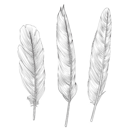 down: Feather set. Doodle sketch feather collection Illustration