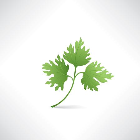 perejil: Perejil fresco verde ilustración vectorial Ensalada icono de la comida sana