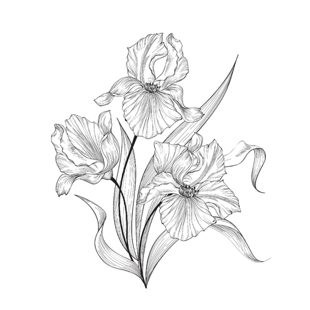 Floral bouquet with flower iris. Vintage Fourish Greeting Card Design. Swirl flower posy engraving border. Floral etching background