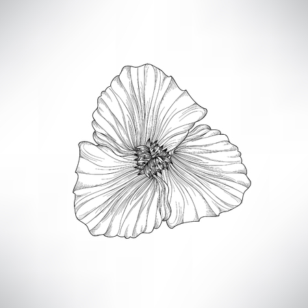 flores exoticas: Flower isolated. Floral engraving illustration. Vector set.