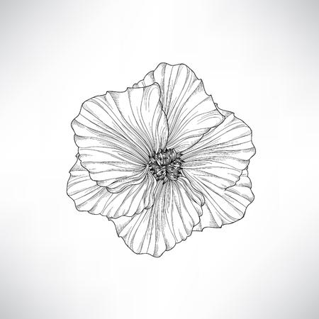 silhouette fleur: Fleur isolée. Floral gravure illustration. Vector set.