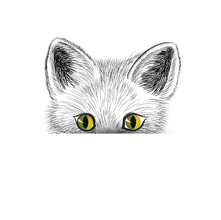 Cat. Kitten face sketch. Cat isolated. Cat head icon looking at camera. Puppy cat illustration Illustration