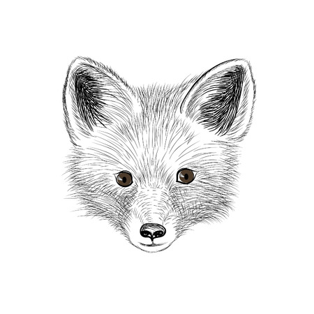 red animal: Fox. Wild animal fox head. Fox face looking at camera. Animal red fox head sketch isolated Illustration