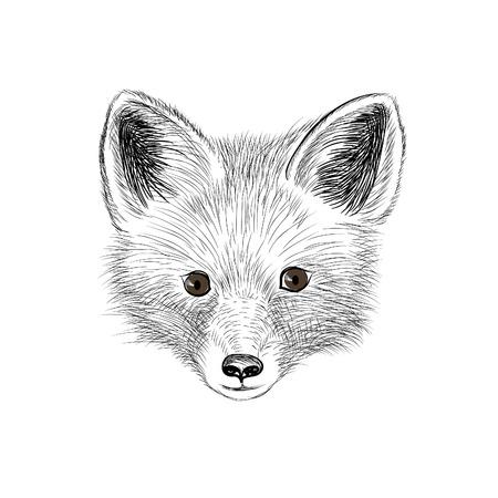 Fox. Wild animal fox head. Fox face looking at camera. Animal red fox head sketch isolated Illustration