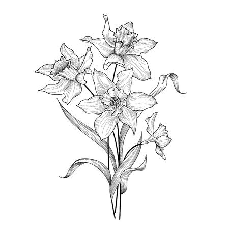Blumenstrauß. Blume Narzisse Gravur Hintergrund. Florales ornamentales Design-Element für Grußkarte. Frühling Natur. Flourish Garten Skizze. Vektorgrafik