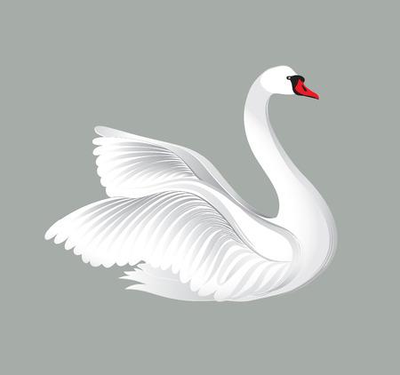 Aves blancas aisladas sobre fondo blanco. Ilustración de los cisnes.