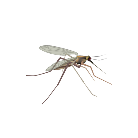Mosquito isolated. Gnat vector illustration. Insect macro view
