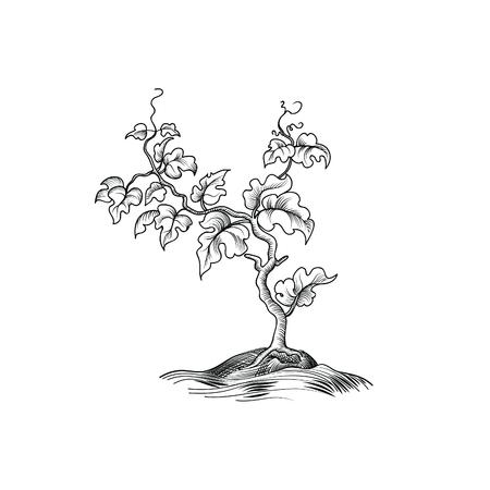 彫刻の葉を持つ植物します。装飾的なブドウの木。植物花の成長。分離された盆栽エッチング図