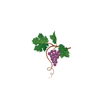 Grape branch. Floral wineyard retro sign. Garden background. Wine making icon Vectores